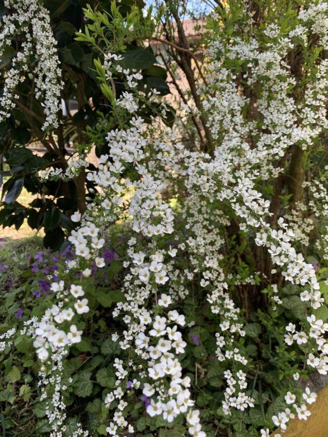 実家の庭に生息する植物たち